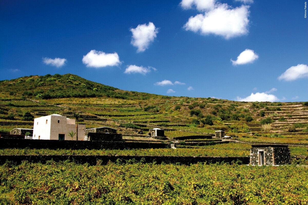 tagAlt.Donnafugata Wine Estate Vineyards Cov
