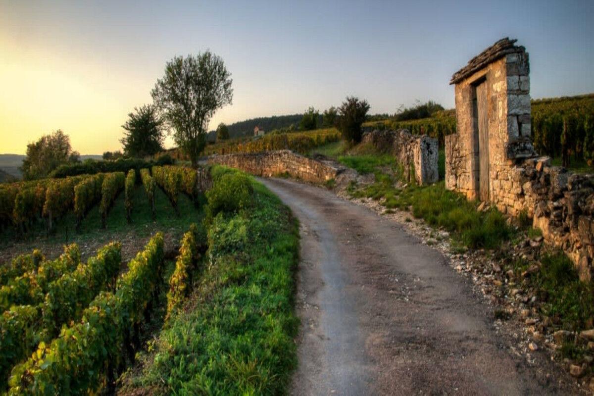 tagAlt.Grand Cru Road scenery Cover