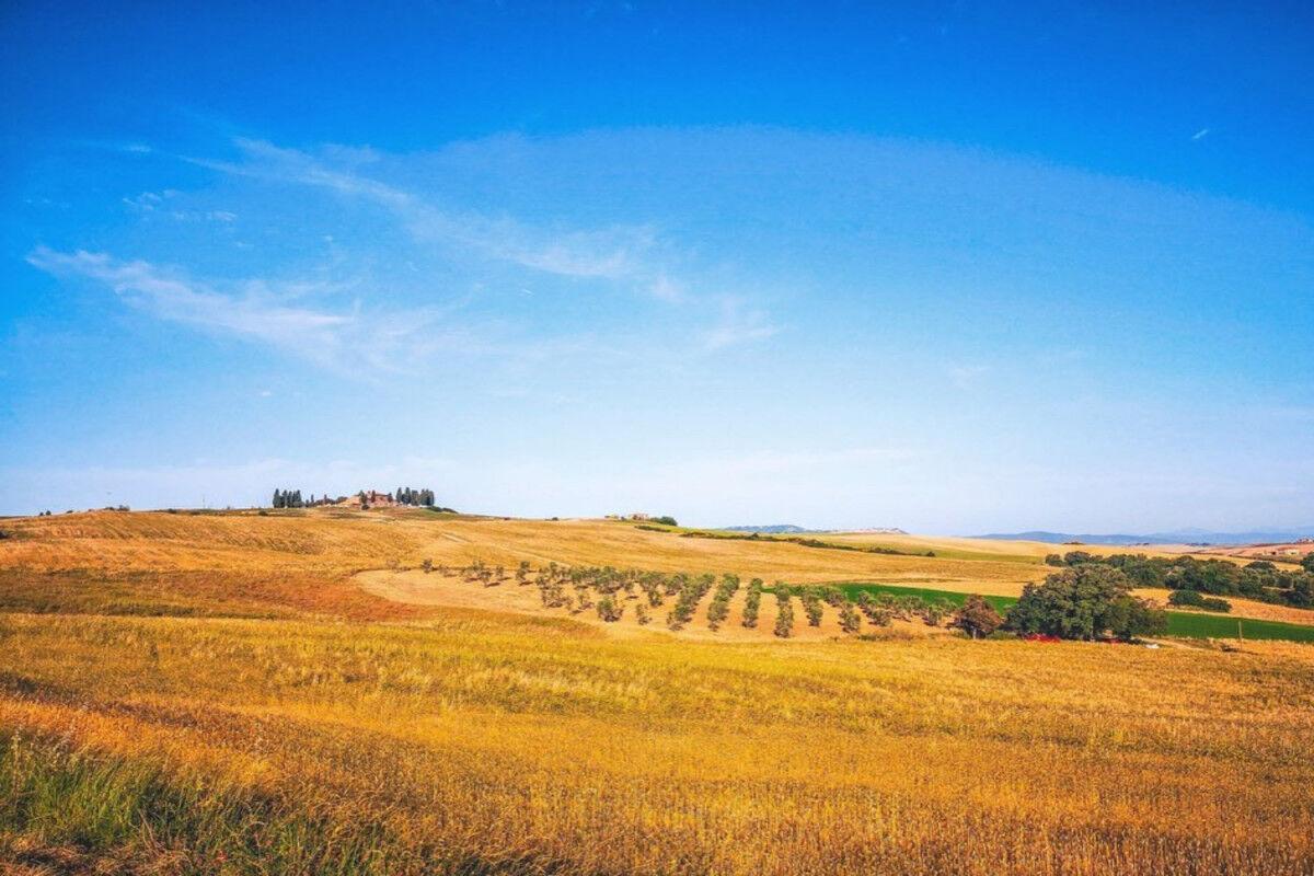 tagAlt.Podere Forte grain fields summer Cover