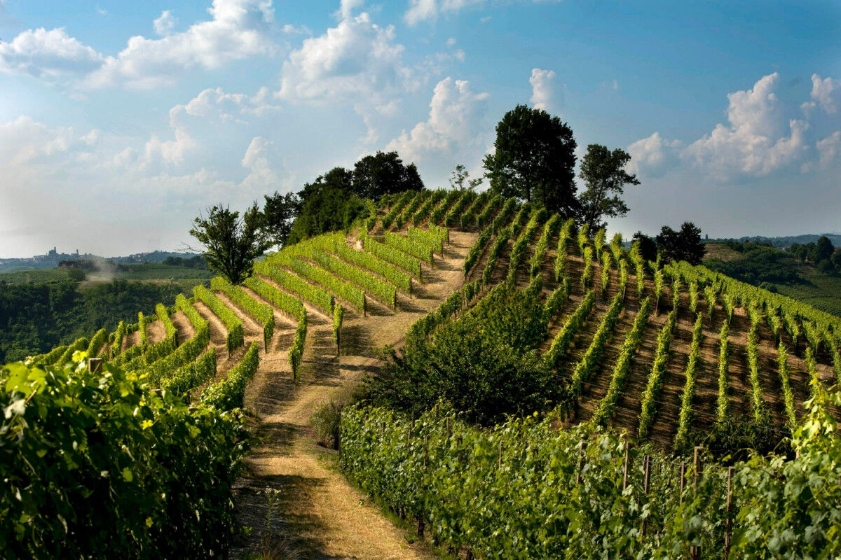 tagAlt.Roero Piedmont vineyards hilltop Cover