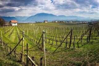 tagAlt.Alto Adige Wine Roads Cover