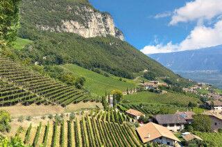 tagAlt.Alto Adige vineyards landscape 3
