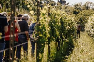 tagAlt.Alto Piemonte vineyards Cover