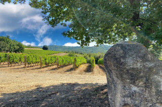 tagAlt.Bolgheri DiVino Countryside Vines Cover