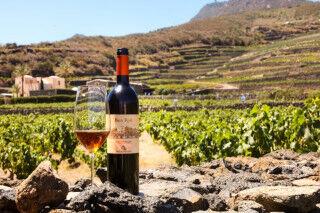 tagAlt.Donnafugata Ben Ryè Calice vineyards Cover