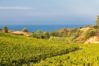 tagAlt.Librandi Pitaffo Vineyards to the Sea cover