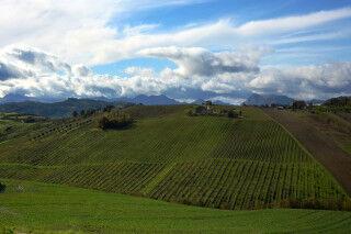 tagAlt.Maiolati Spontini vineyards with sunshine Cov