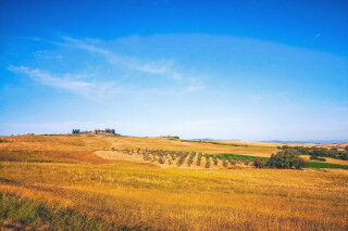 tagAlt.Podere Forte grain fields summer Cover