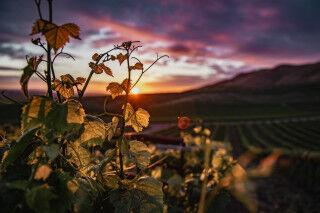 tagAlt.Ruché Wine Cov