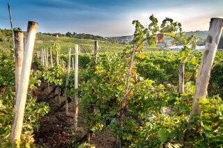 tagAlt.Vineyards Oltrepo Pavese Landscape Cover