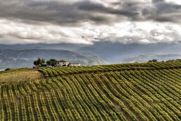 tagAlt.Alessandro Di Nisio Vineyards landscape 9