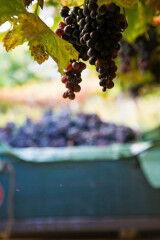 tagAlt.Amarone vertical wine bunch 5