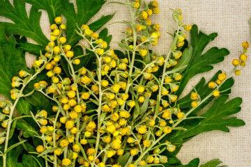 tagAlt.Artemesia flowers Wemut 2