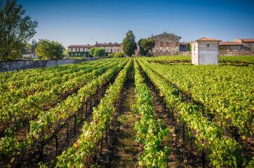 tagAlt.Berlucchi winery Vigna Brolo 2