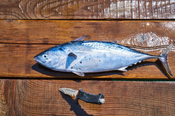 tagAlt.Blue fish with knife caught 3