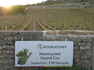 tagAlt.Burgundy Cru vineyard Montrachet 2