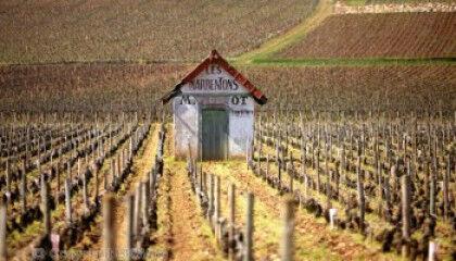 tagAlt.Burgundy vineyard shed 4
