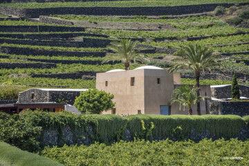 tagAlt.Donnafugata Pantelleria Khamma winery 8