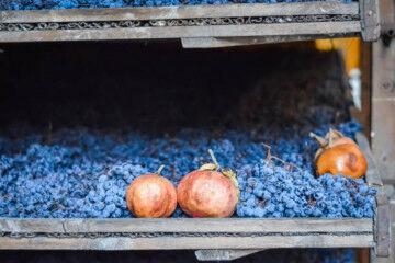 tagAlt.Drying grapes fruit inside 8