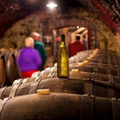 tagAlt.Entre le Mers wine cellar visit 3