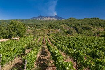 tagAlt.Etna wine regions vineyards landscape 5