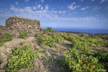 tagAlt.Favarotta Donnafugata vineyard Panorama 3