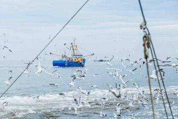 tagAlt.Fishing boat at sea 4