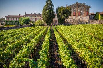 tagAlt.Franciacorta vineyards view 4