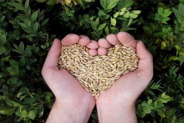 tagAlt.Heart shaped grain article 4