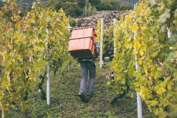 tagAlt.Heroic viticulture Valtellina 7