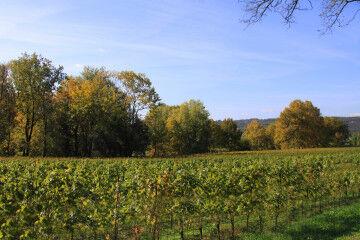 tagAlt.Lake Garda wines vineyards 1