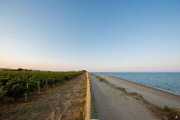 tagAlt.Librandi Conferitori Seaside Vineyards 2