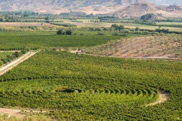 tagAlt.Librandi Tenuta Rosaneti Circular Vineyards 5