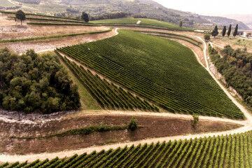 tagAlt.Maternigo Tedeschi Valpolicella wine region landscape 1