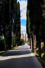 tagAlt.Montepulciano cypress lined road 2