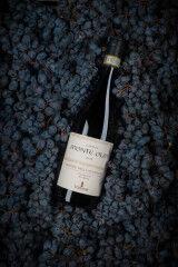 tagAlt.Monti Olmi dried grapes 5
