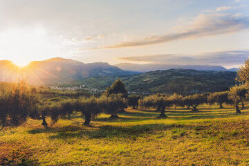 tagAlt.Olive Oil Grove Mediterranea 10
