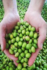 tagAlt.Podere Forte olives 5