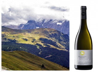 tagAlt.Praesulis white Alto Adige wines collage 1