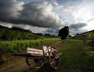 tagAlt.Roero Piedmont cart vineyards 8