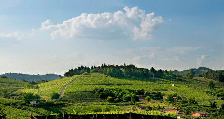 tagAlt.Roero Piedmont vineyards countryside 9