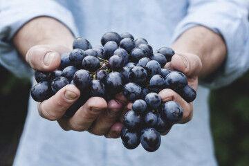 tagAlt.Sangiovese grapes Montepulciano 9