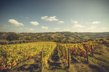 tagAlt.Schiavone Montepulciano Marina Cvetic vineyards 3