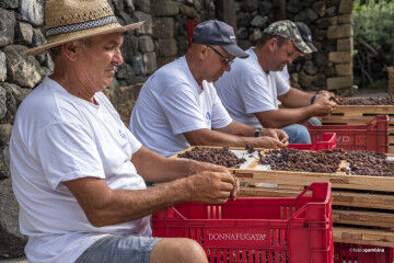 tagAlt.Sicilian grape workers manual destemming Pantelleria 5