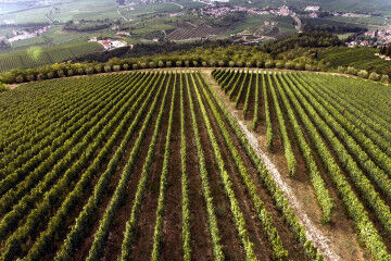 tagAlt.Tedeschi winery vineyards Fabriseria 1 20211407
