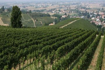 tagAlt.Tenuta Mazzolino vineyards 4