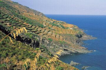 tagAlt.Terraces Pantelleria Khamma wine estate 10