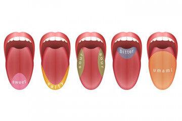 tagAlt.Tongue receptor map 5