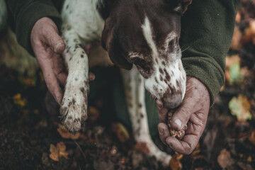 tagAlt.Truffle Dog sniffing found truffle 3
