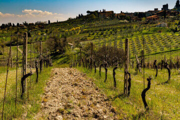 tagAlt.Tuscan winery vines countryside 3